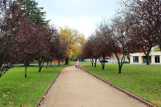 Fall colours in Robertson Park in Orange NSW