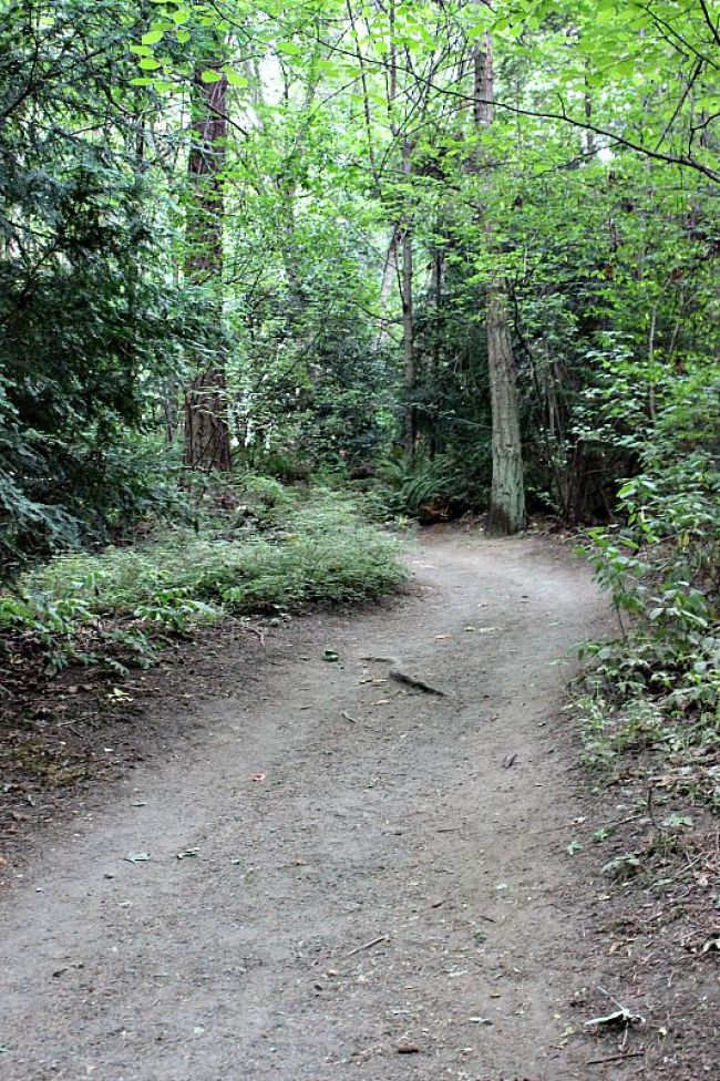 Discovery Park trail in Seattle WA