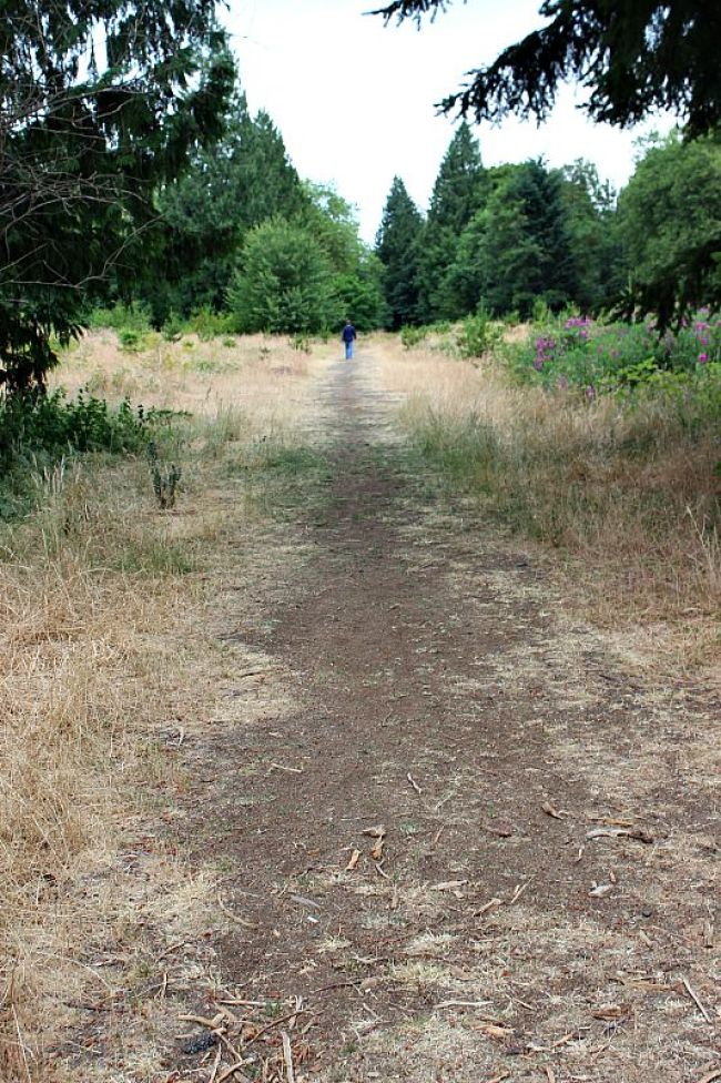 Trail in Discovery Park, Seattle