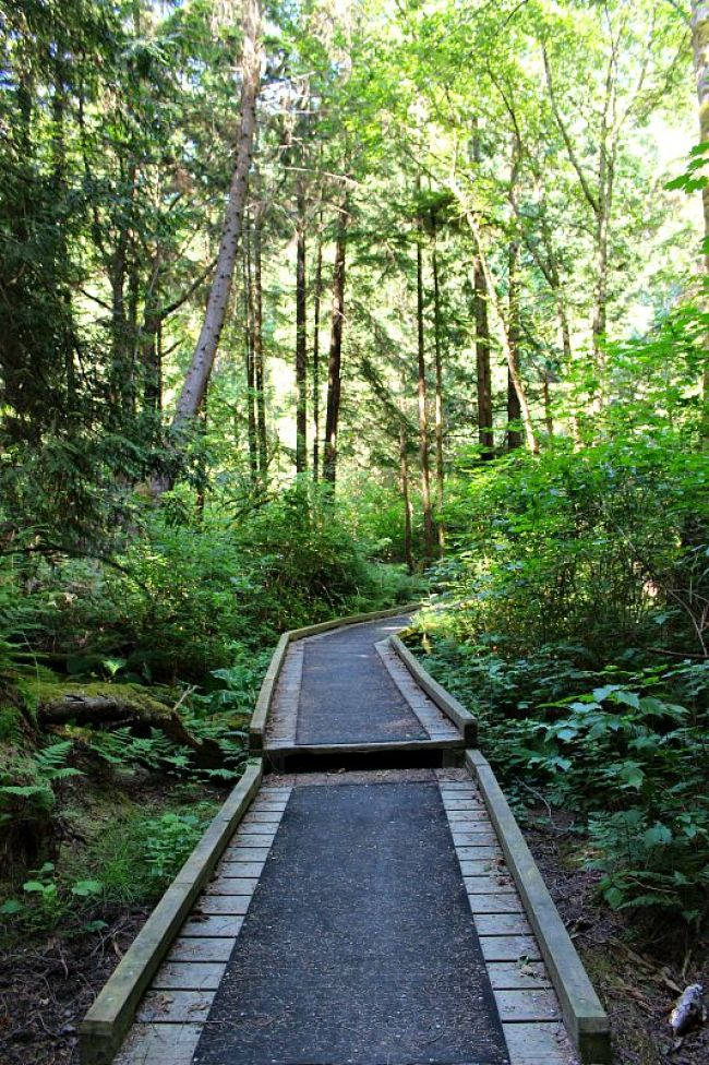 The Best Vancouver Itinerary: 4 Days in Summer. Hiking in Pacific Spirit Regional Park during summer in Vancouver