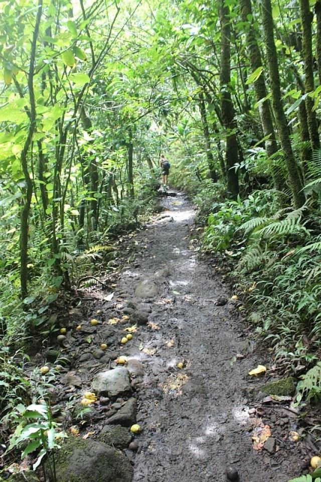 Trail to Hanakapiai Falls