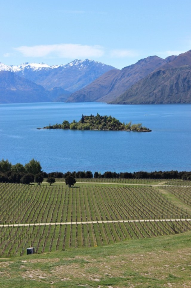 Views from Rippon Vineyard in the Otago Region of New Zealand