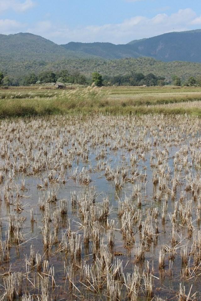 Marsh near Inle Lake - Trekking Kalaw to Inle Lake