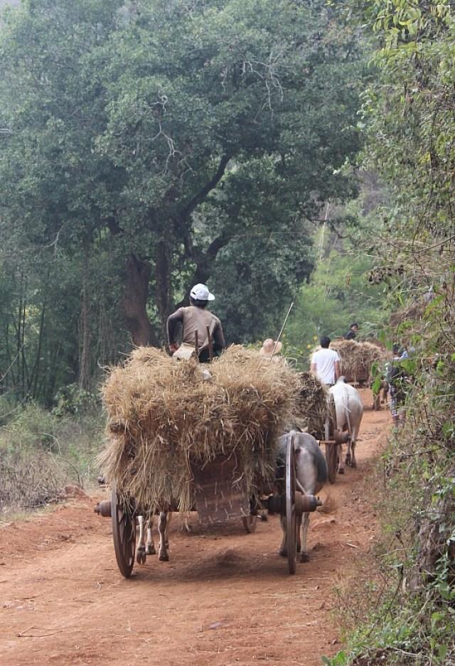 Northern Myanmar traffic jam during trekking Kalaw to Inle Lake