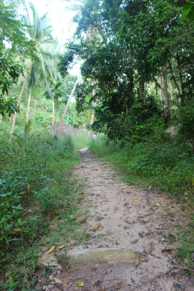 Trail on Koh Tao