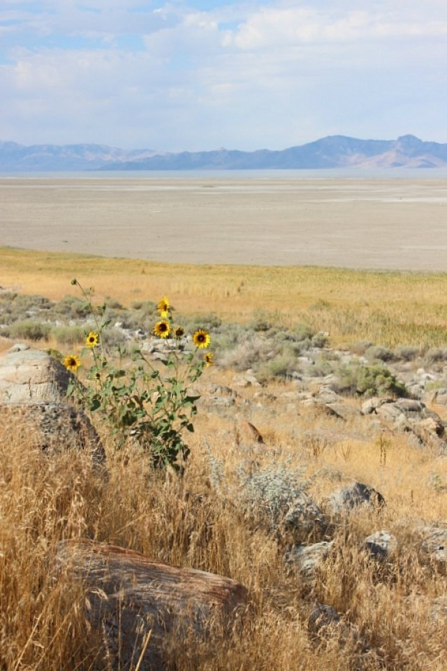 Hiking on Antelope Island in Northern Utah during month 15 of digital nomad life