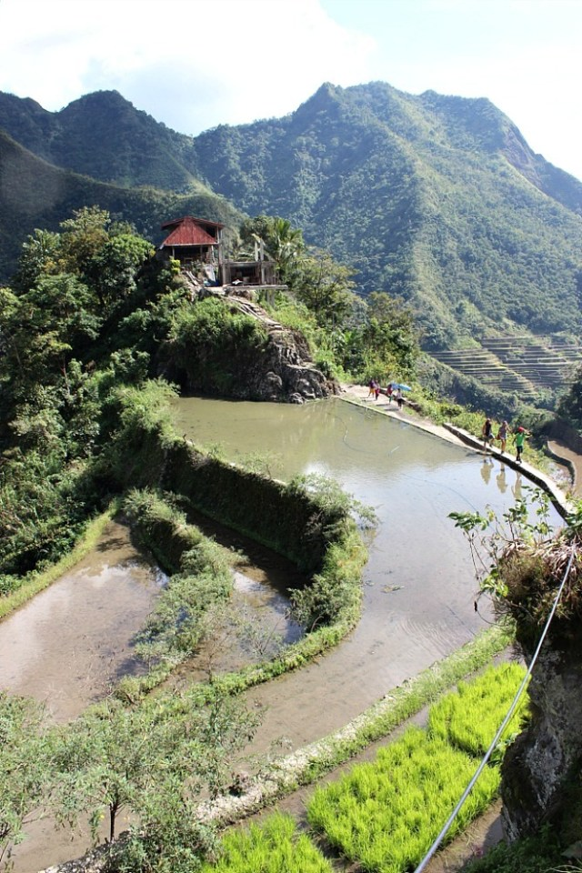 Marveling at the Batad Rice Terraces in the Philippines