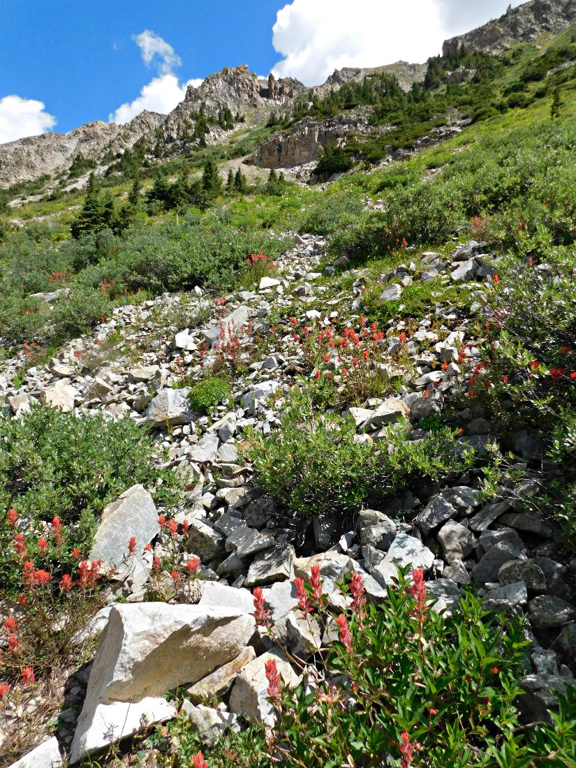 Wild flowers on the East Maroon Pass trail from Crested Butte to Aspen