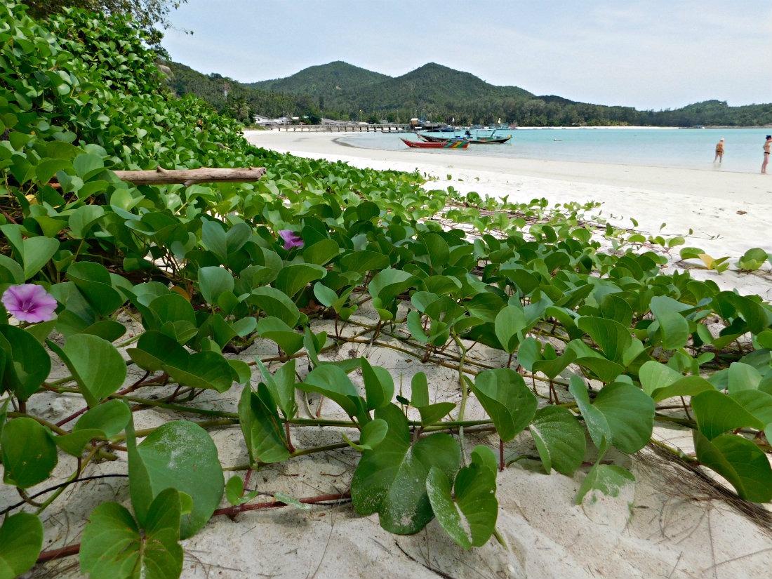 Chalok Lam beach on Koh Pha Ngan, Thailand