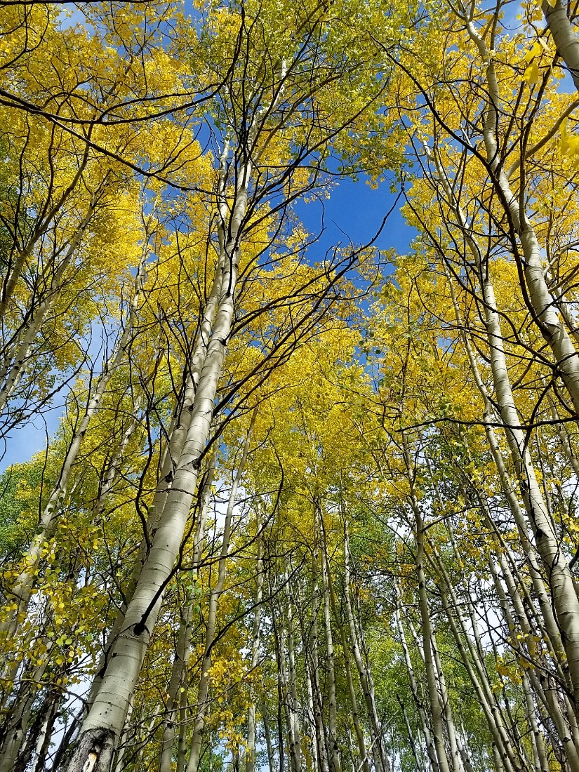 Fall colors in Colorado