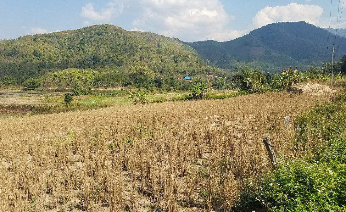 Rice paddies around Muang Sing in Northern Laos
