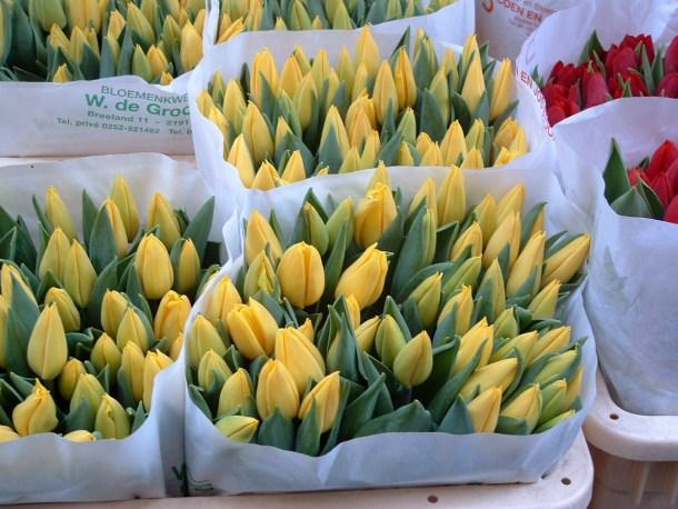 Tulipanes Mercado de Las Flores