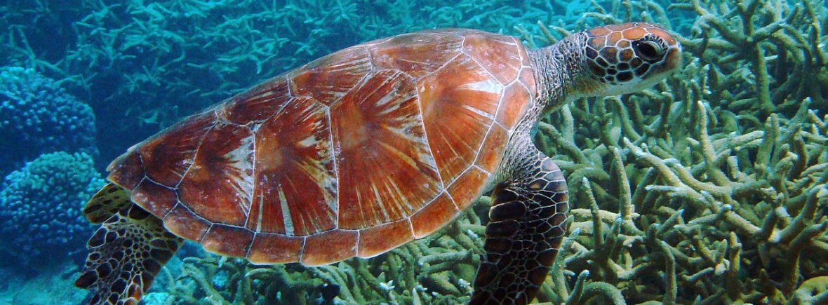 Best places to see green sea turtles, WildSide, World Wild Web