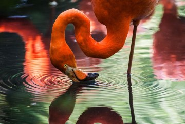 Best places to see flamingos, WildSide, World Wild Web