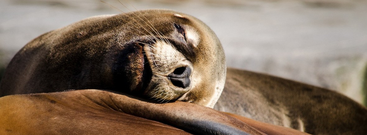 Best places to see sea lions, WildSide, World Wild Web