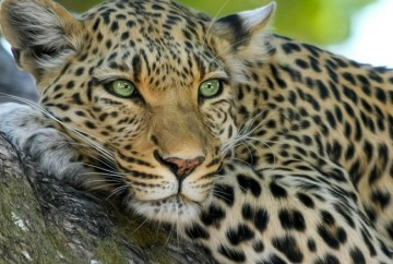 Best places to see leopards, WildSide, World Wild Web