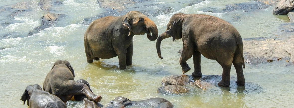 Best places to see Asian elephants, WIldSide, World Wild Web