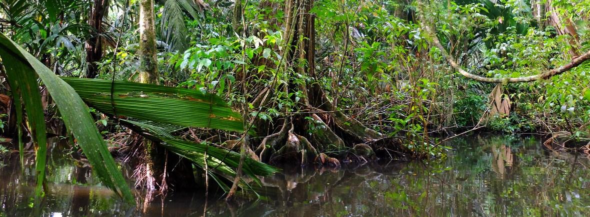 Wildlife in Tortuguero, Costa Rica, WildSide, World Wild Web