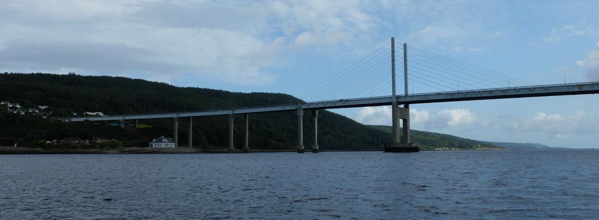 Wildlife in Moray Firth