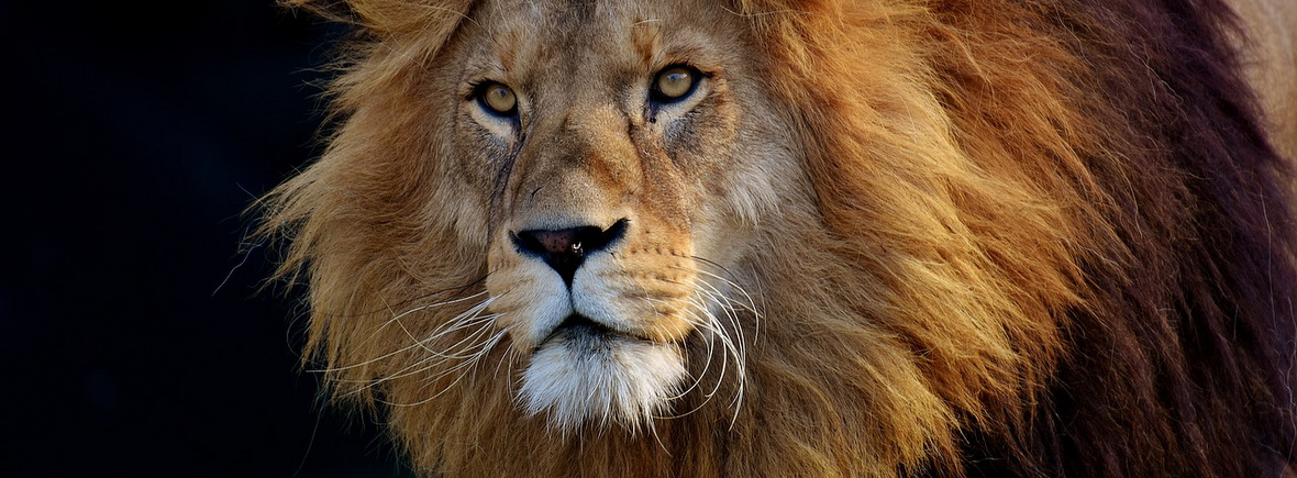 where to see lions, wildside, world wild web