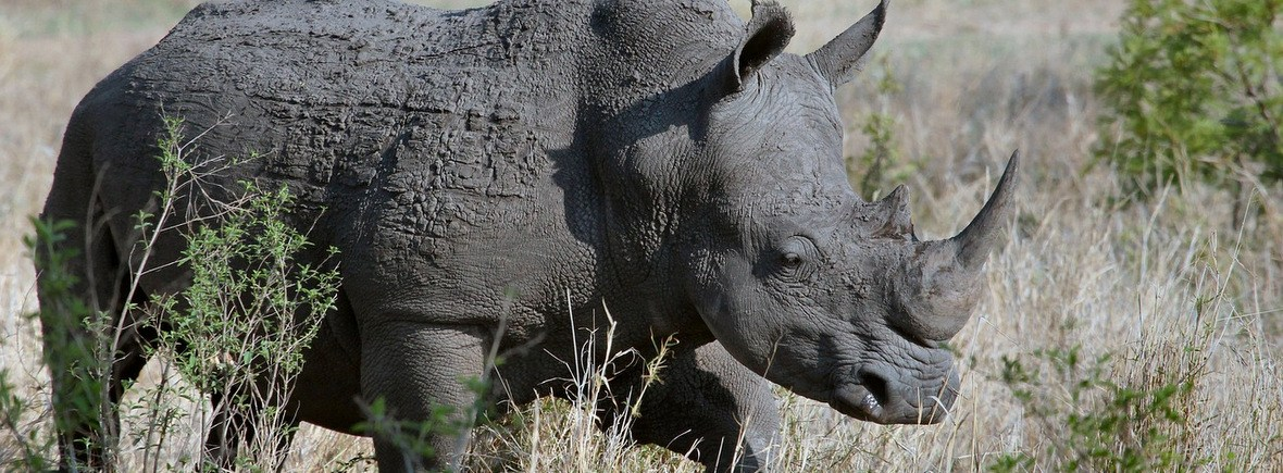 where to see rhinos, wildside, world wild web
