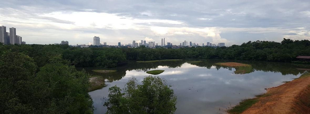 wildlife in Sungei Boluh, Singapore, WildSide, World Wild Web
