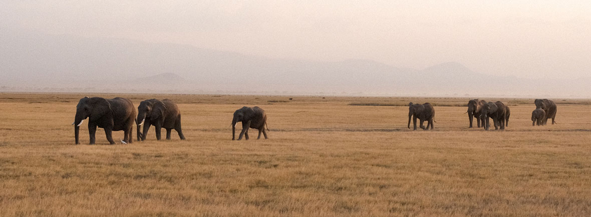 wildlife in Amboseli, wildside, world wild web