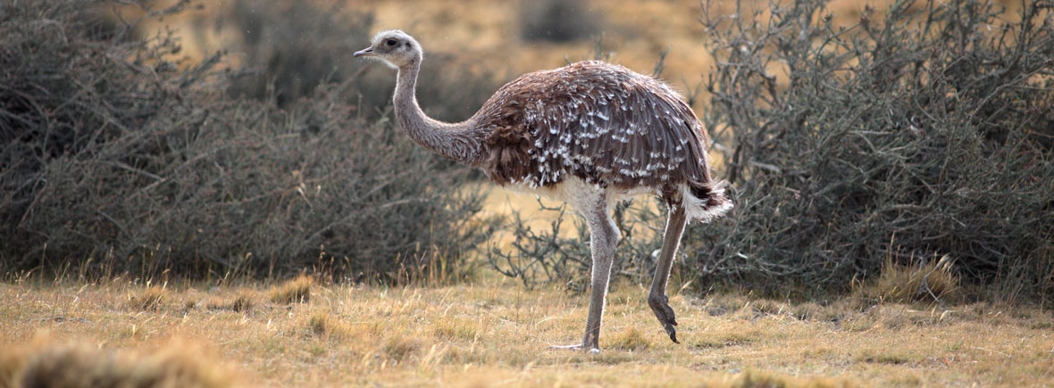 where to see rheas, wildside, world wild web