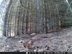 red squirrel, wildside, world wild web