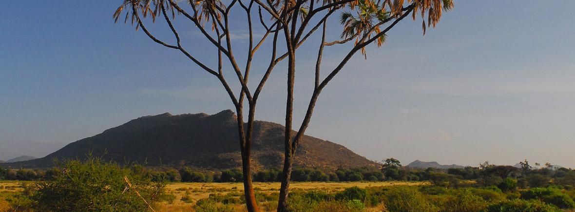 wildlife in samburu, wildside, world wild web