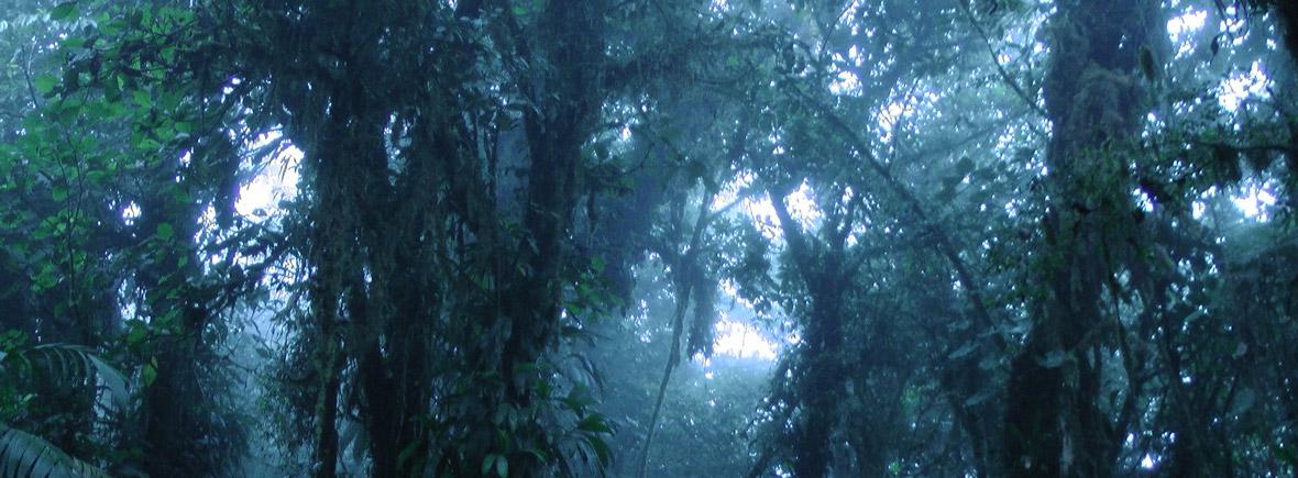 wildlife in monteverde, wildside, world wild web