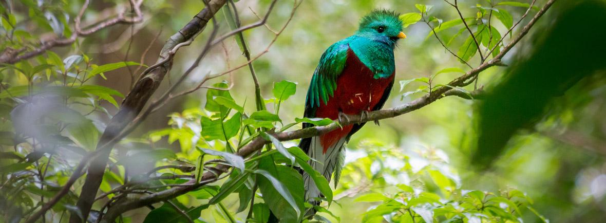 where to see quetzals, wildside, world wild web