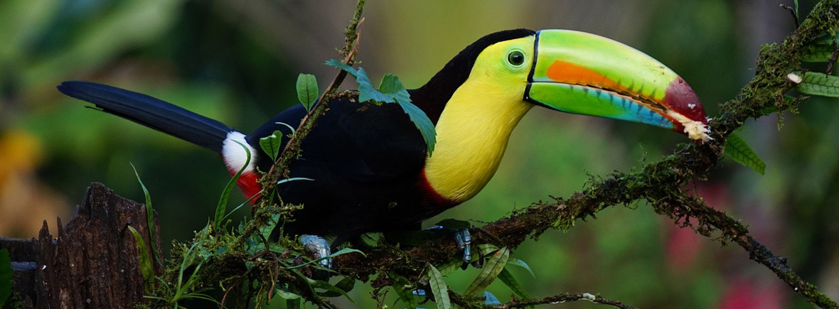 where to see toucans, wildside, world wild web