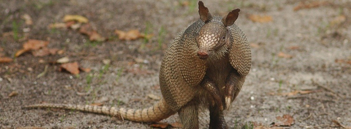 where to see armadillos, wildside, world wild web