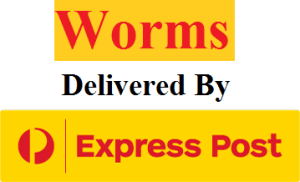 Worms Delivered By Expresspost In Australia 4