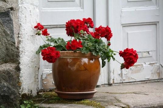 flower-725359_640