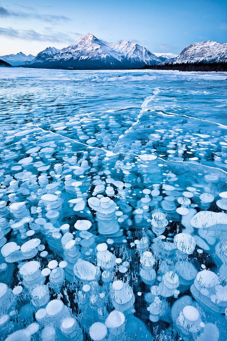 Flammable ice bubbles frozen bubbles of methane, trapped beneath Alberta's Lake Abraham.