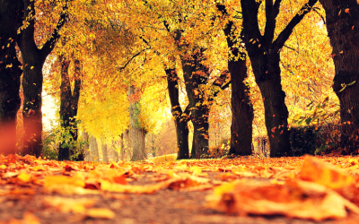 How To Get Amazing Mileage From Seasonal Content For Autumn