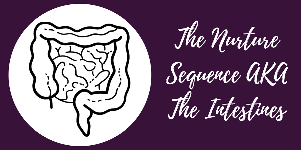 Your Nurture Sequence AKA The Intestines - The Anatomy Of A Content Marketing Strategy - Hazel Butler - The Write Copy Girl - Freelance Content Marketer, Copywriter, And Ghostwriter
