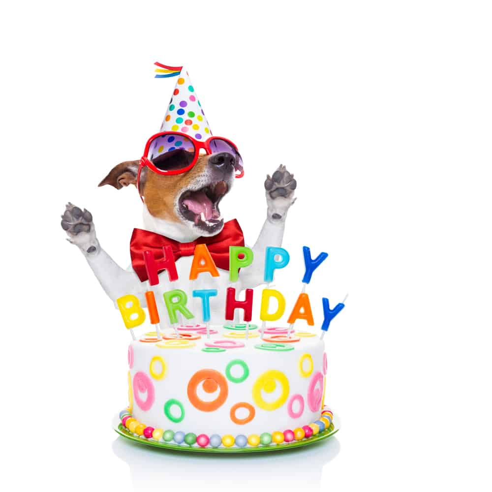 Absolutely Awesome Birthday Wishes For Your Dog The Write Greeting