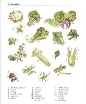 تعليم الخضراوات في كتاب The New Oxford Picture Dictionary