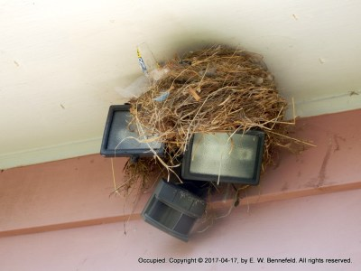 birds' nest beneath the roof