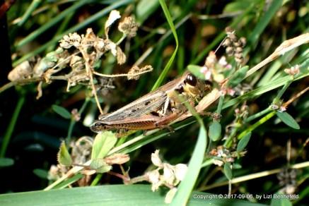 Friendly Grasshopper