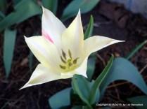 Springtime Flower
