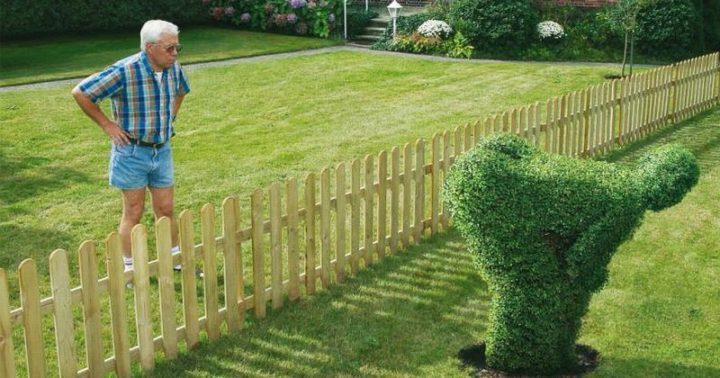 Image result for neighbor shrub ass