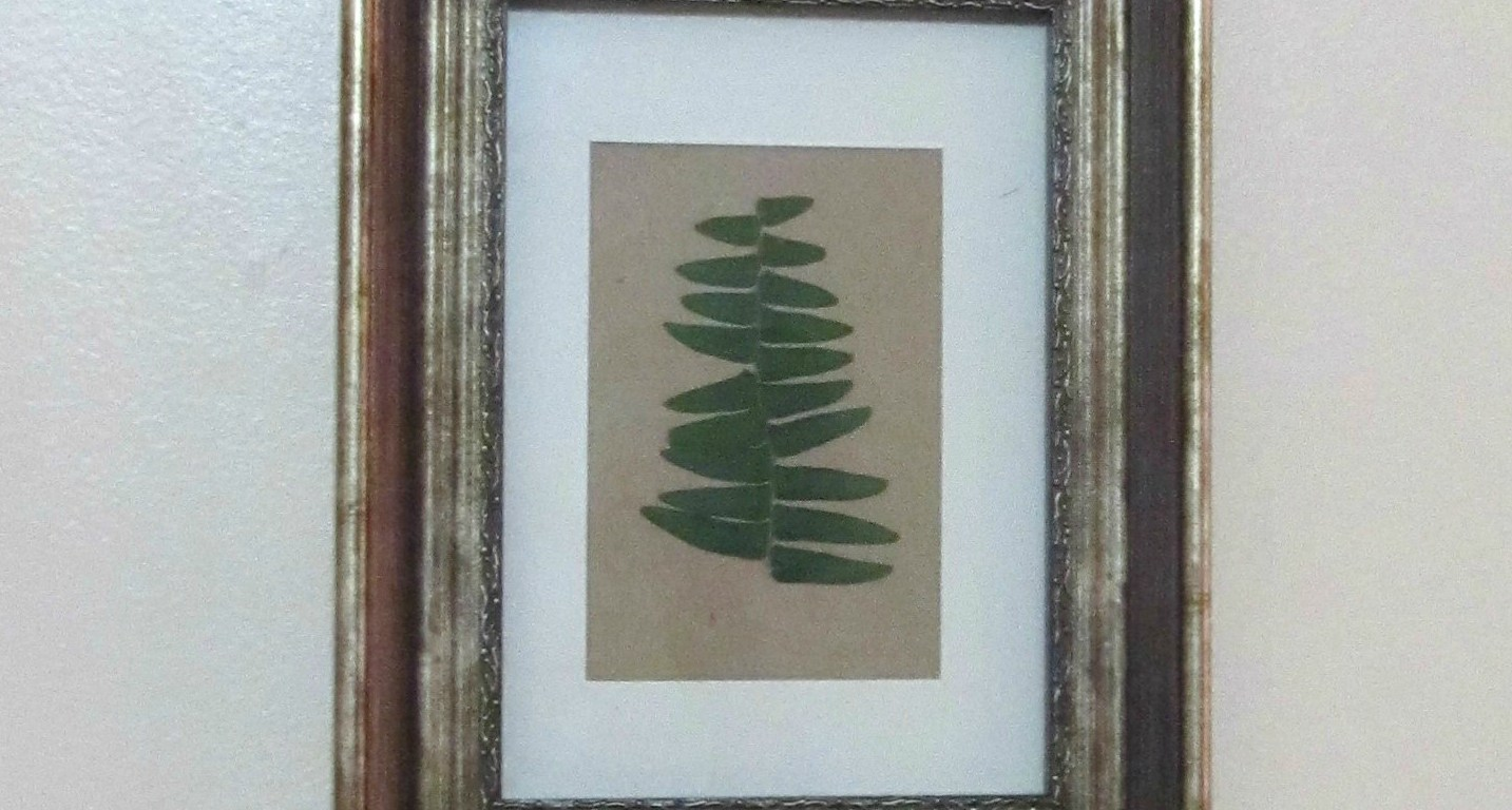 Diy pressed fern botanical art the xenophile life solutioingenieria Gallery