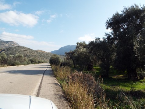 Olive groves near Delphi