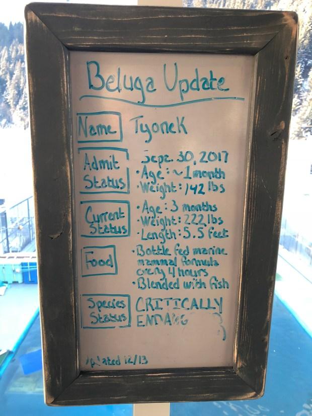Baby Beluga - 1