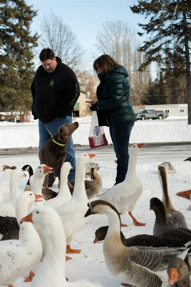 Woodland Park Ducks - 22