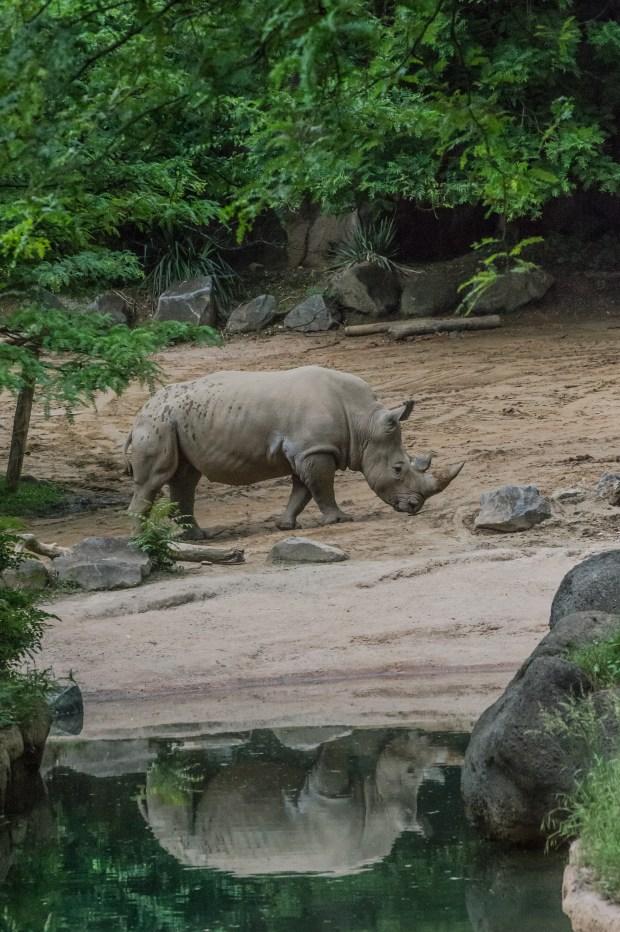 Baltimore Zoo - 18